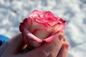 قدرت گل ها