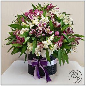 باکس گل آلستر